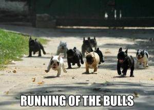 Funny-dogs-Running-of-the-bulls